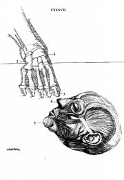 thumbnail of cobo-propaganda-boicot-al-mundial-78-34